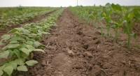 Agricultural Farm Dolovac From Futog