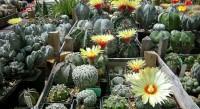 Serbian Cactus Association