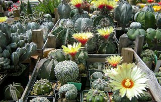Serbian Cactus Association