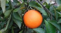 Sunce juga sija – rasadnik tropskih i subtropskih sadnica