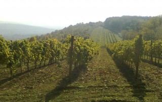 Oplenački vinogradi