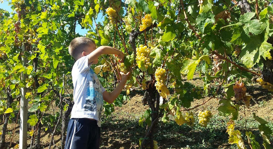Tradicija i kvalitet kosovskih vina