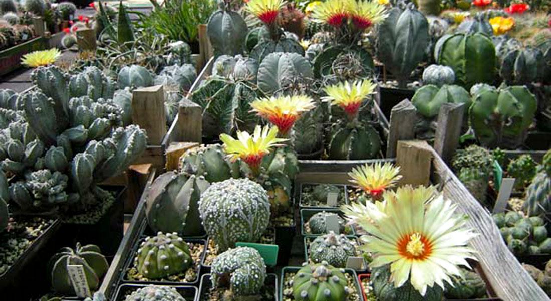 Društvo kaktusara Srbije