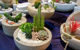 Borda Joseph - A Great Selection of Cacti