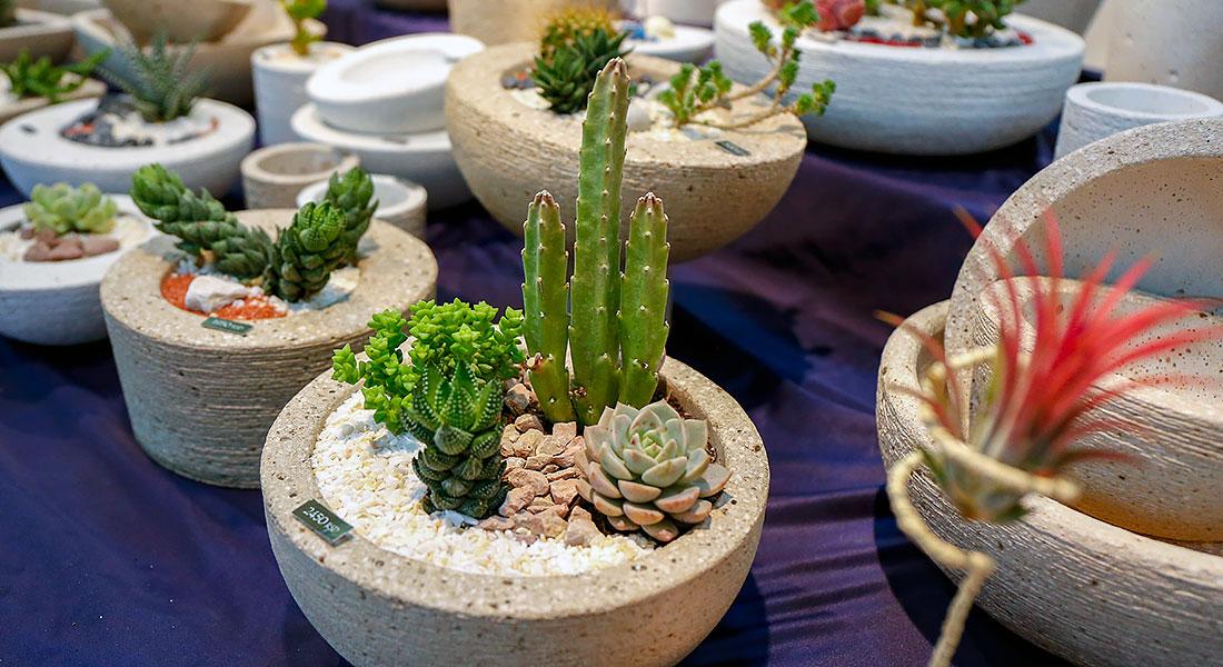 Borda Jožef – veliki izbor kaktusa
